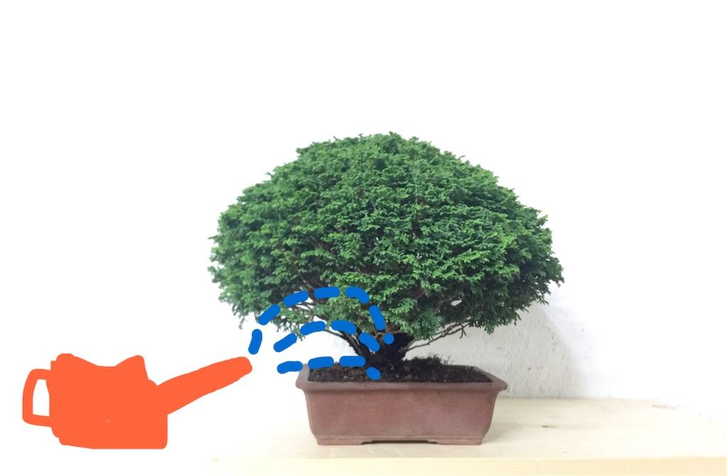 f:id:bonsailabo-rin:20170525204834j:image