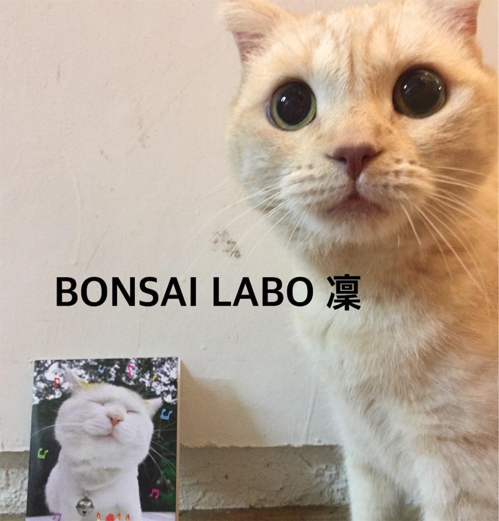 f:id:bonsailabo-rin:20170830121740j:image
