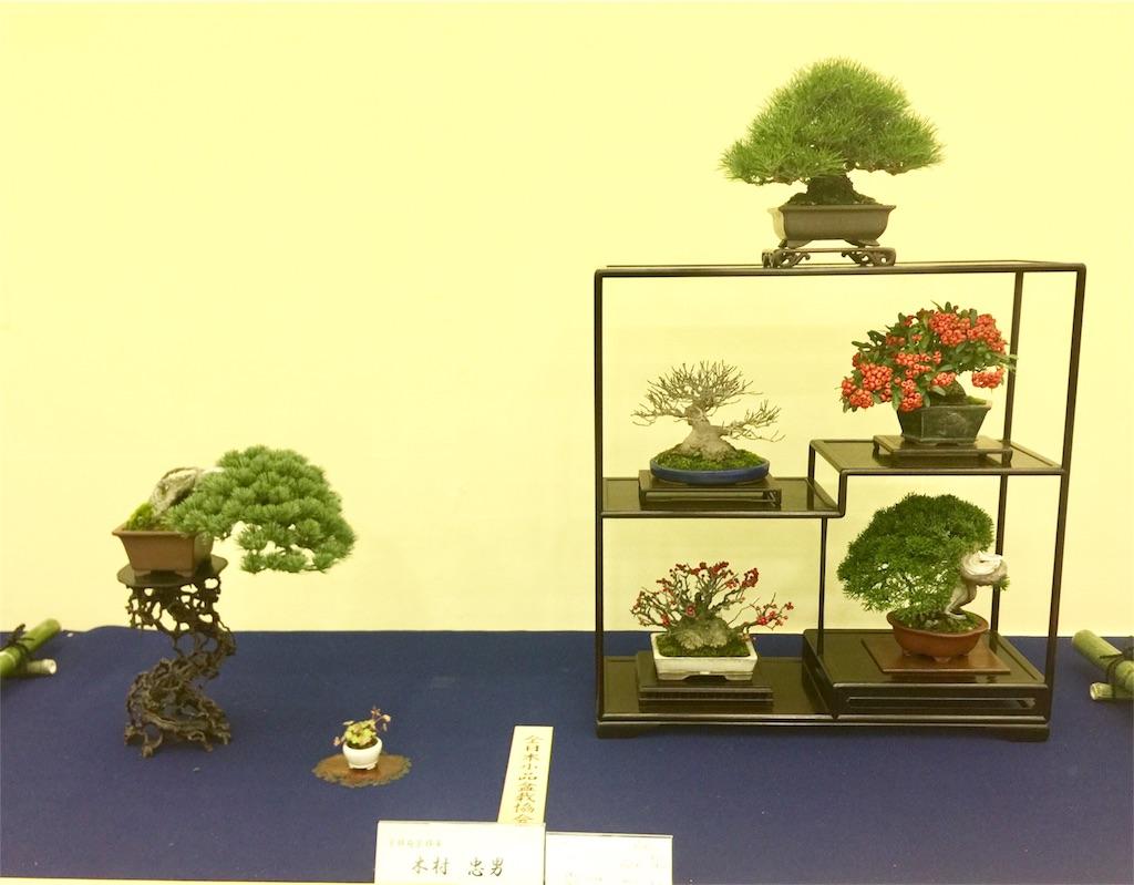 f:id:bonsailabo-rin:20171118190243j:image