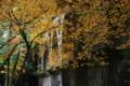 『京都新聞写真コンテスト 秋色の水路閣』