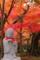 京都新聞写真コンテスト 紅の中で