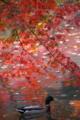 [紅葉]京都新聞写真コンテスト 楓暖簾