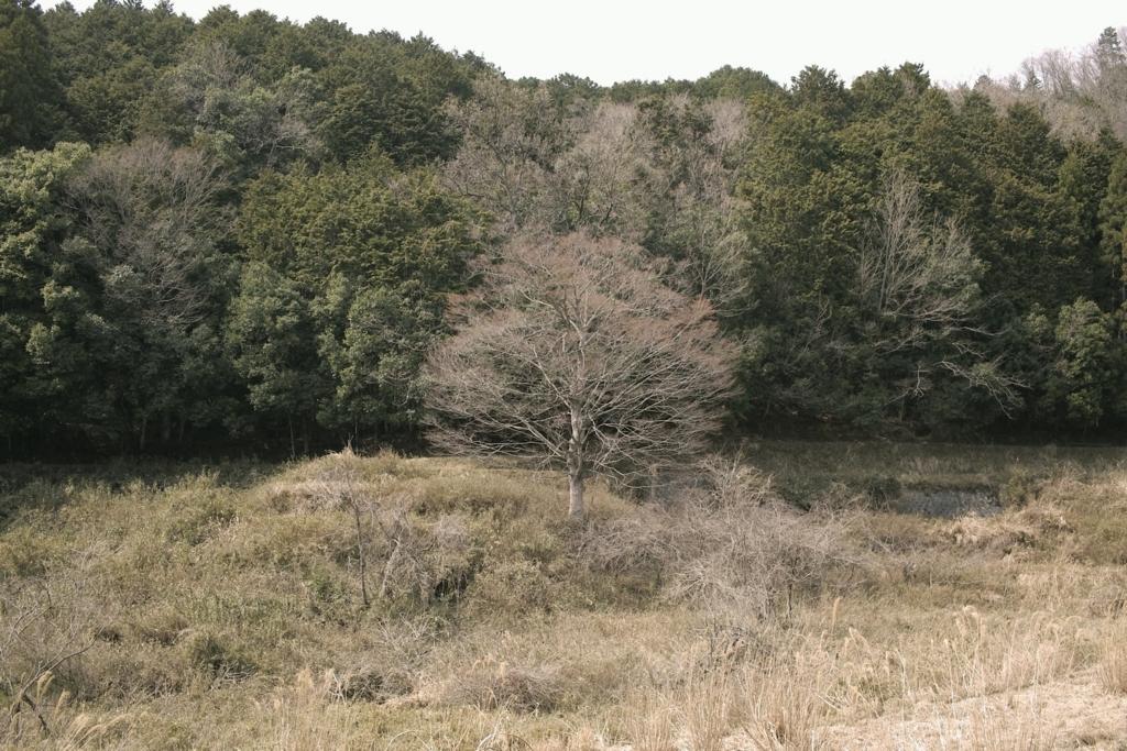 f:id:borishoi-arakawa:20180401200050j:plain