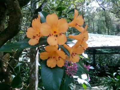 マウンテンガーデンに咲く花