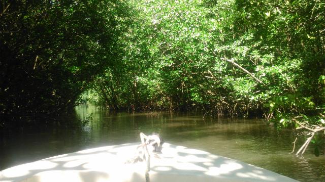 マングローブの森林