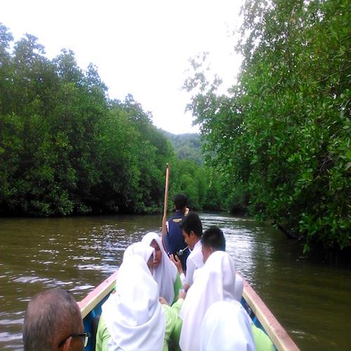ペニンバワン村のマングローブ