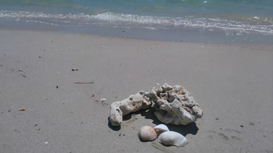 UMSのビーチは珊瑚と貝殻がいっぱい