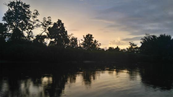 ボルネオ島のジャングルの夕焼け