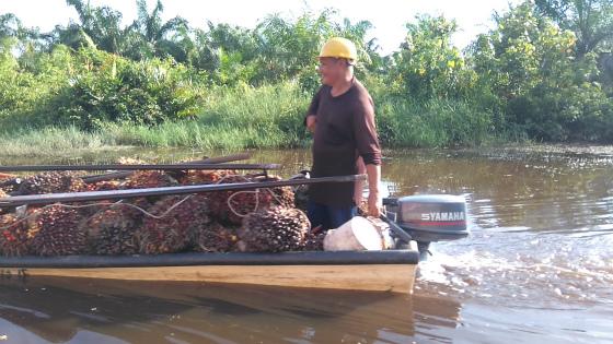 ガラマ川でアブラヤシの実を運ぶボート