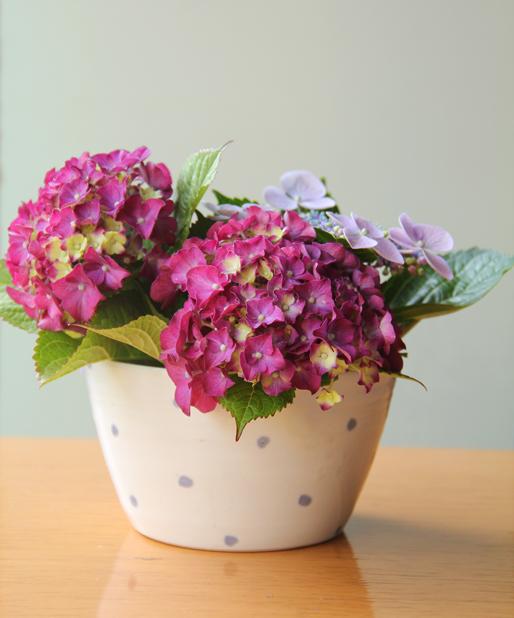 f:id:botanical-kamakura:20180611120447j:plain