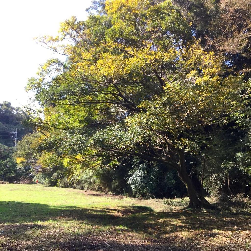f:id:botanical-kamakura:20181118080758j:plain