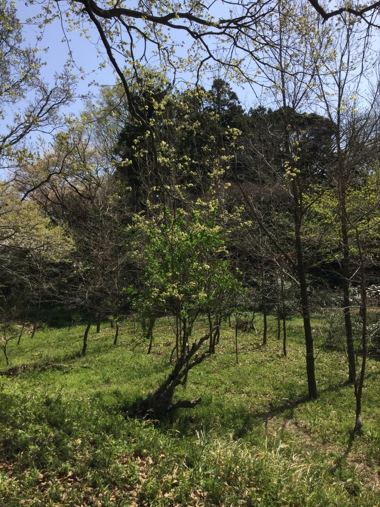 f:id:botanical-kamakura:20181207000746j:plain