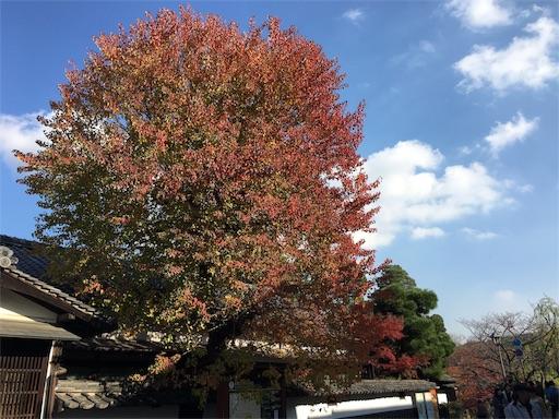 f:id:botchikurashiki:20171121143141j:image