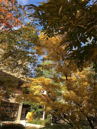 f:id:botchikurashiki:20171121145005j:image