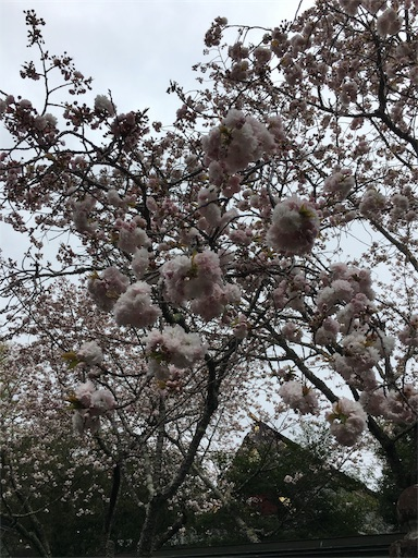f:id:botchikurashiki:20180421232833j:image