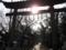 鷲宮神社-良い感じに逆光