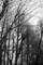 グランドの並木