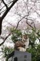 [散歩][動物]緑が丘霊園