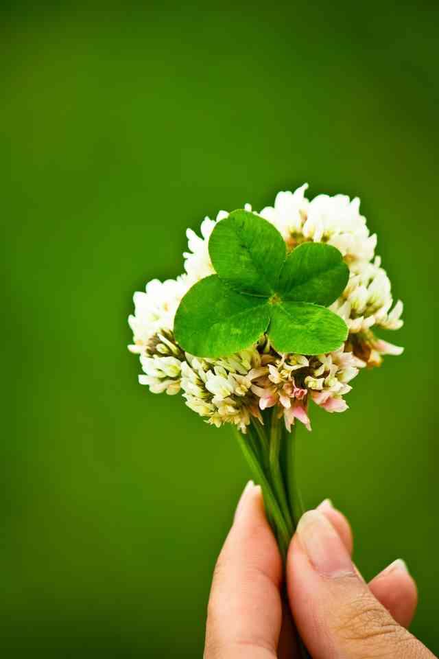 f:id:bouquet-toss:20161018005848j:plain