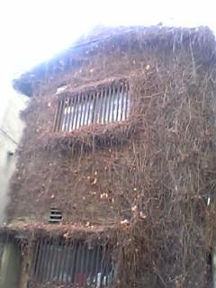 f:id:bousisensei:20070125183723j:image