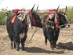 f:id:bousisensei:20081231094358j:image