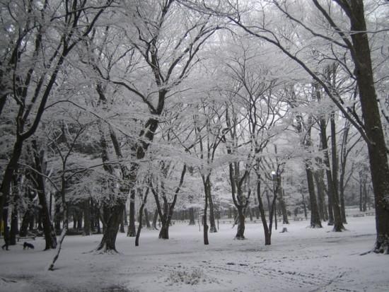 f:id:bousisensei:20100218073159j:image
