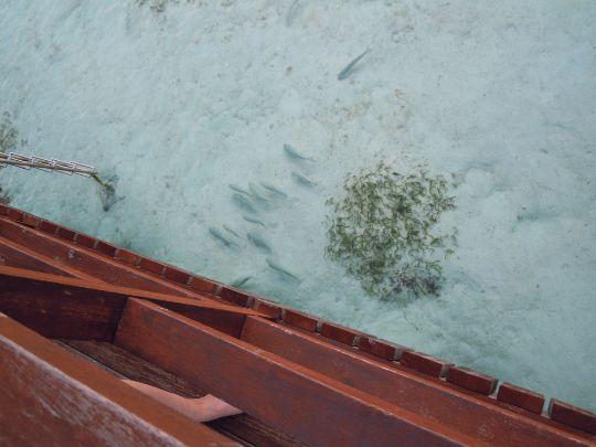 泳いでる魚の写真