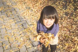落ち葉を拾い集める子供の写真