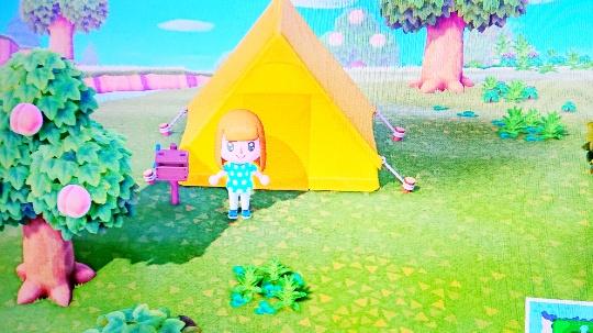 キャンプ設置した画像