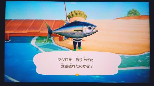 マグロを釣り上げた写真