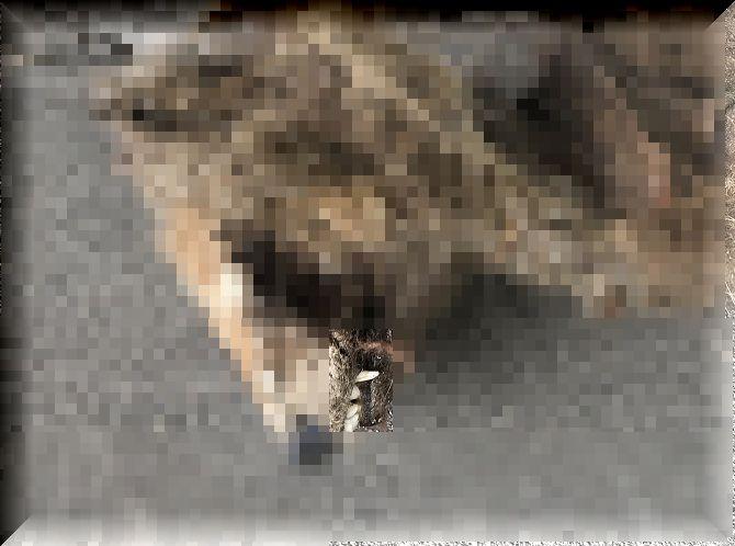 f:id:bowwow00:20200515073101j:plain