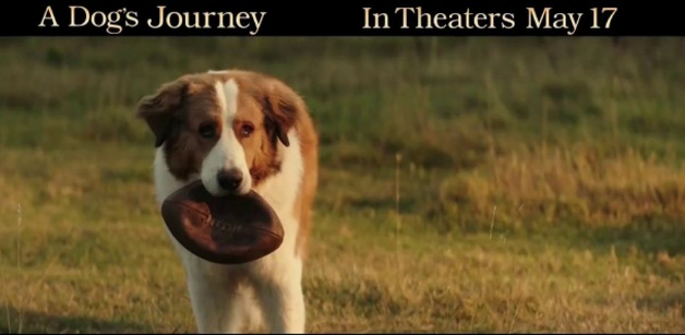 a dogs journey full movie online free 123movies