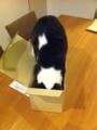 2011/5/17 小箱に入るすもも姫