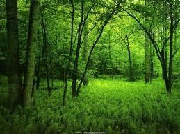 f:id:bragelone:20120512062823j:image