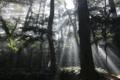 鹿島神宮の御神木に神々が降臨しています。