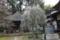"""伊能忠敬の墓がある観福寺(千葉県佐原市)の""""垂れ梅"""""""