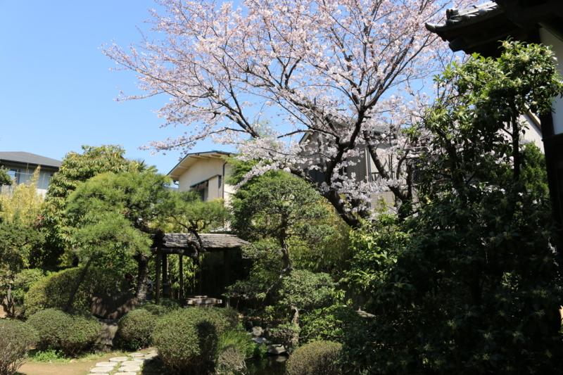 ほのかに歴史ロマンを花咲かす真間井と桜(千葉県市川市)
