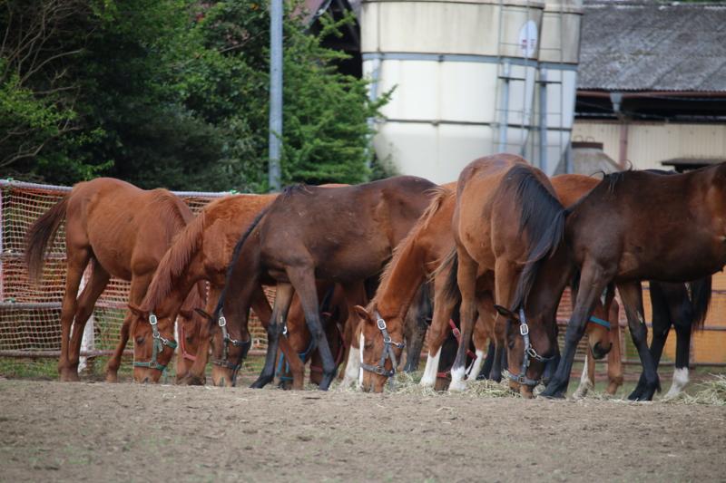 うちの近くの牧場の馬。バイクと馬は人の乗り物、鹿は神の乗り物。