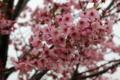 高岡さんと教え子達は約束とおりこの桜の木の下で再開していることで