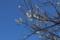 お芽出度い(立春の前日、旧暦の大晦日にあたる節分の日の某所にて)