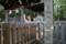 楠木正成の墓(湊川神社内、徳川光圀による創建)