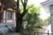 多田神社にある徳川光圀が手植えした銀杏の木
