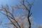 西行法師が百夜通いに想いを寄せて植樹した墨染桜(千葉県東金市)