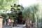 正面が頂法寺本堂(拝殿)と右手が有名な六角柳
