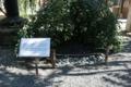 へそ石。江戸時代まで祇園祭山鉾巡行の順番は京のヘソ六角堂で籤引き