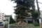 西浦の小町榧