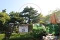 弁慶松と弁慶産湯井戸(和歌山県田辺市役所)