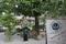熊野本宮創建2050年記念の金色八咫烏(ポスト上)と御神木「タラヨウ