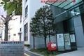 東京中央郵便局(東京都千代田区)前にある多羅葉(はがきの木)