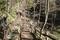 すげの沢(4名の生存者が発見された場所)